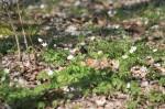 Frühling im Brieselanger Wald