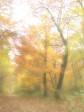 Prächtiges Farbenspiel im Herbst