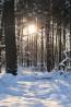 Das wahre Licht gibt es im Winter