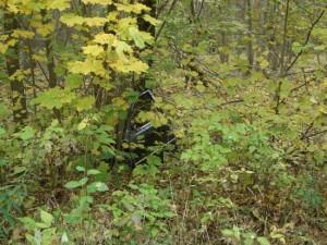 Müll im Brieselanger Wald